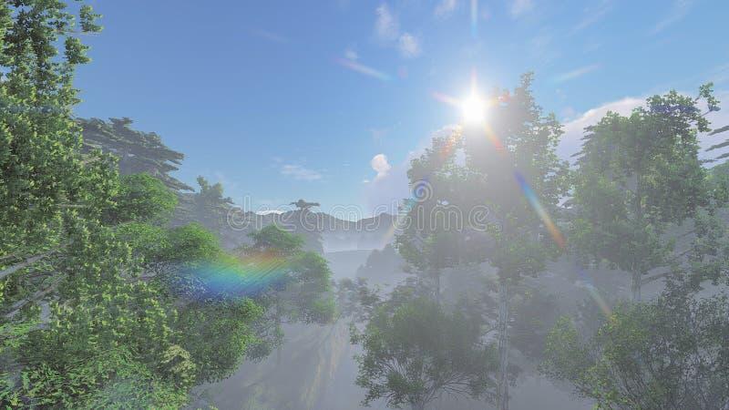Солнце над туманным лесом стоковые фотографии rf