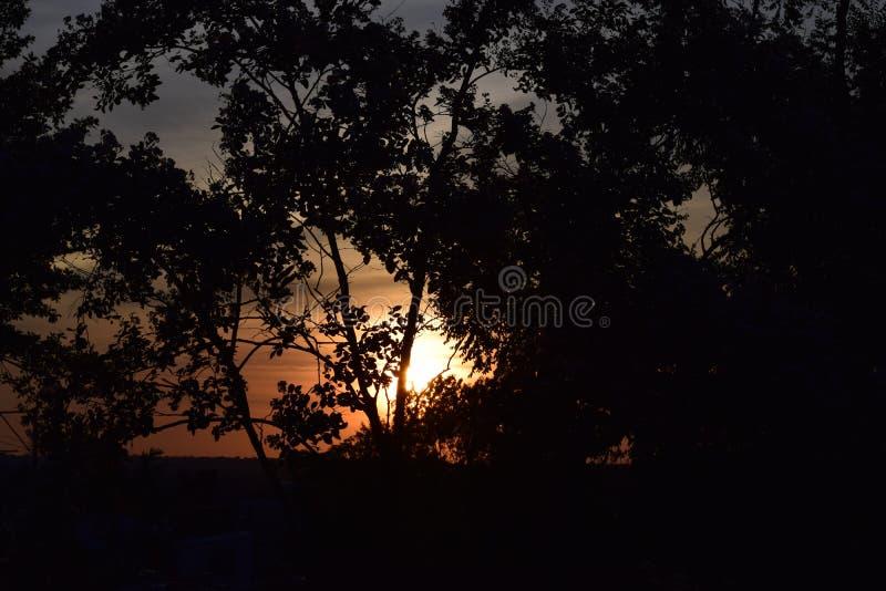 Солнце на сумраке пряча за деревьями стоковое изображение rf