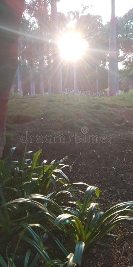 Солнце на траве стоковое фото