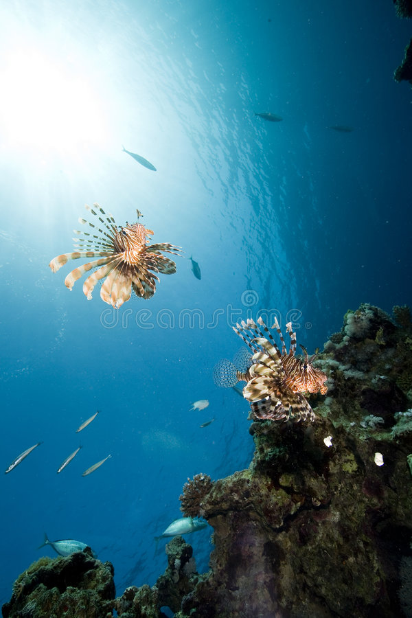 солнце океана рыб стоковое фото