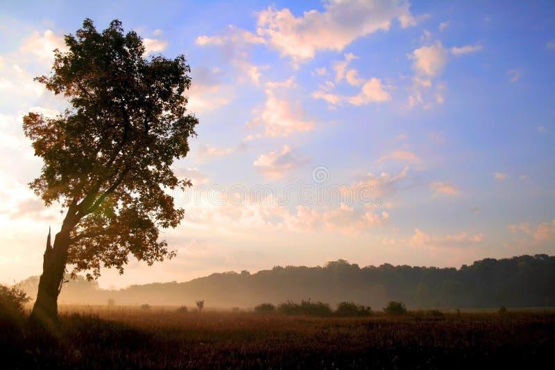 солнце подъема утра стоковые изображения rf