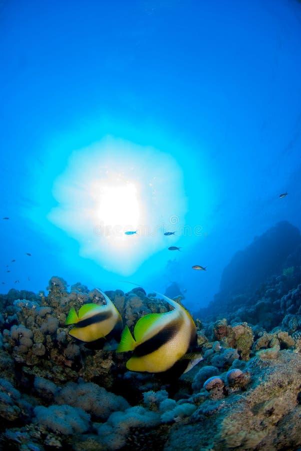 солнце рыб дуо вниз стоковая фотография