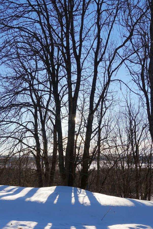 Солнце светит от высоких деревьев на морозный зимний день стоковые изображения