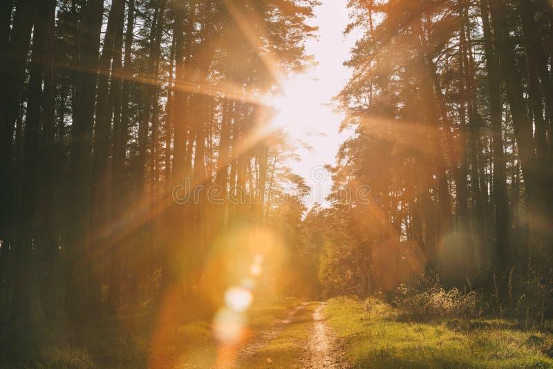 Солнце светя над майной леса, проселочной дорогой, путем, дорожкой до конца стоковое изображение