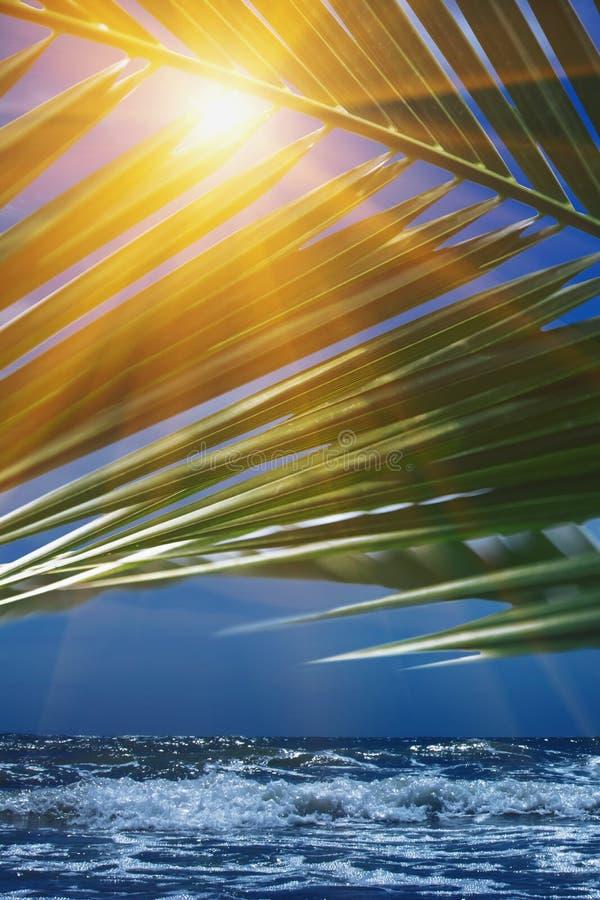 Солнце светя через лист излучать зеленые как символ остатков, wacation и праздника лета стоковые изображения rf