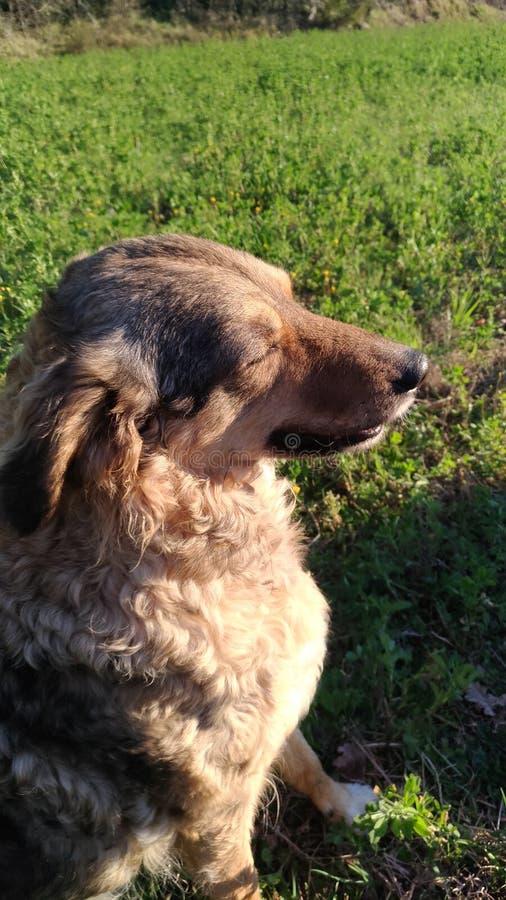 Солнце собаки стоковое фото rf