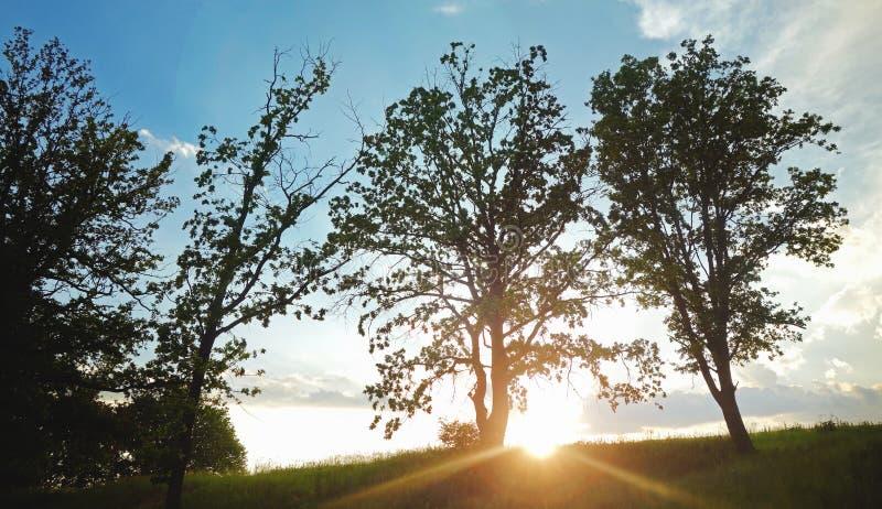 Солнце устанавливая в сельскую местность стоковые изображения rf