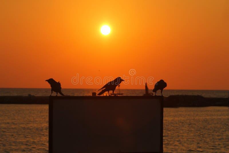 Солнце установило с водой и песком, Кнопперс-стороной, Шри-Ланка, стоковая фотография