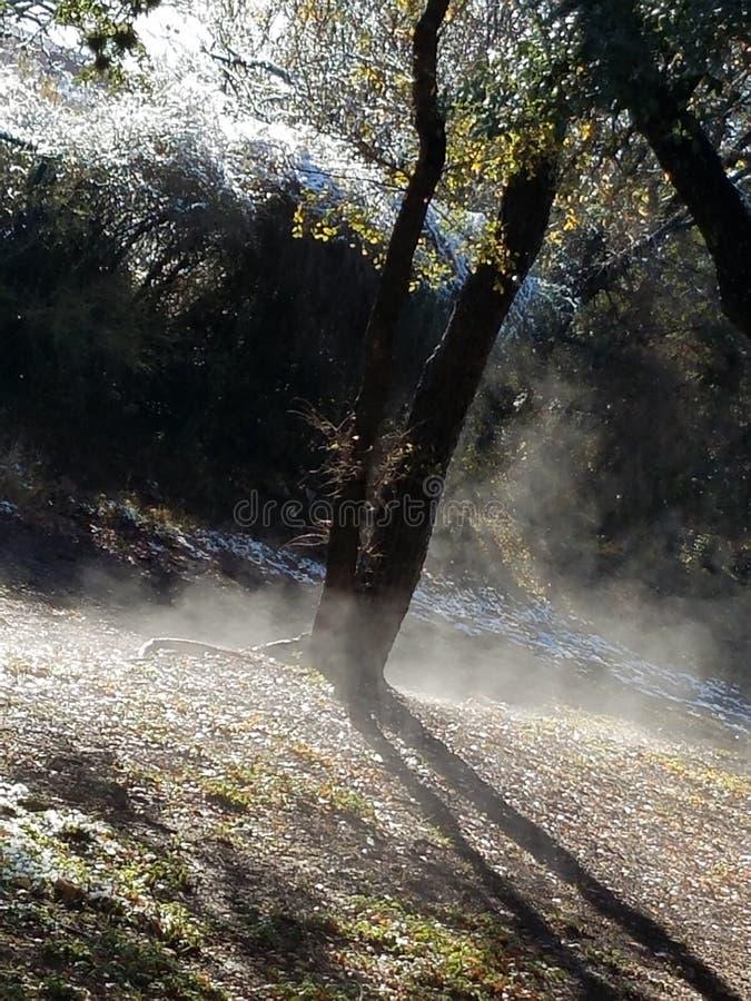 Солнце утра с туманом стоковое изображение rf