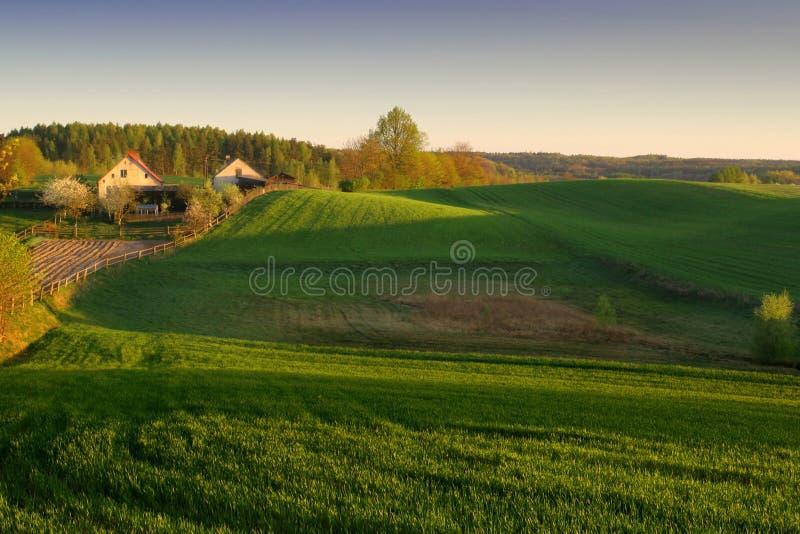 солнце утра фермы стоковое изображение