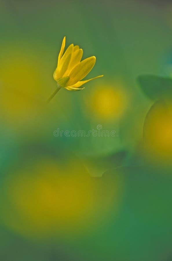 солнце цветка Стоковое Фото