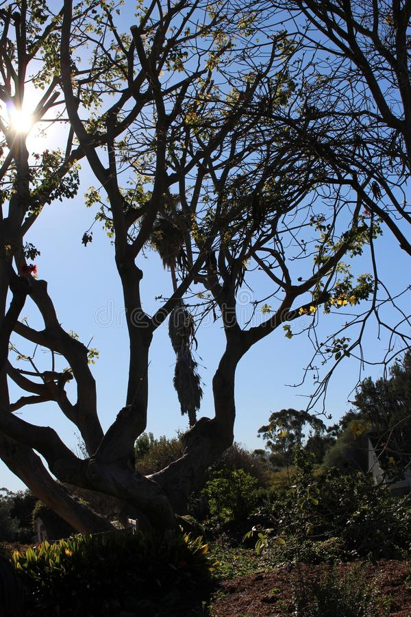 Солнце через дерево стоковое фото