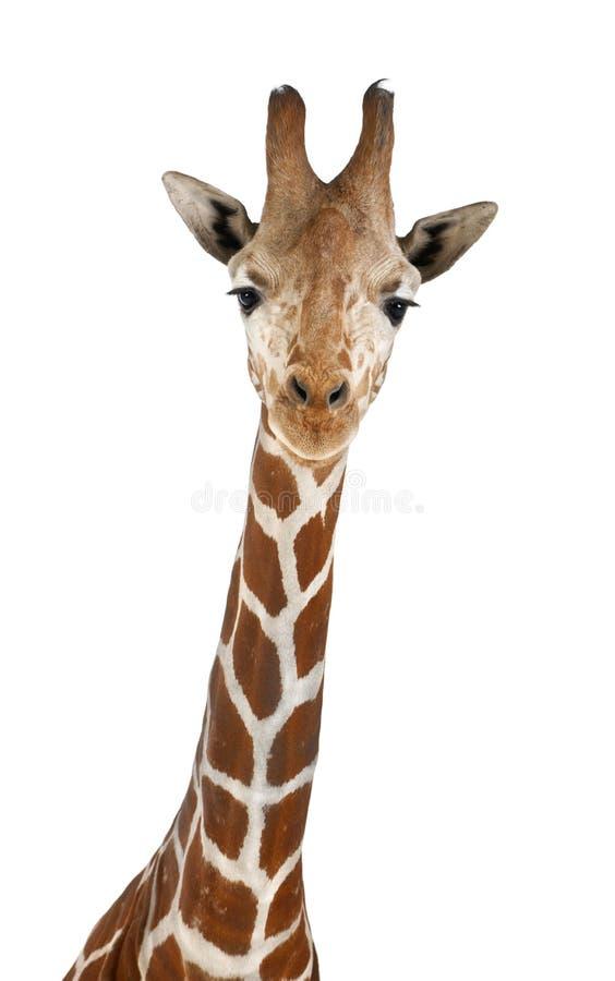 Сомалийский Giraffe стоковое изображение