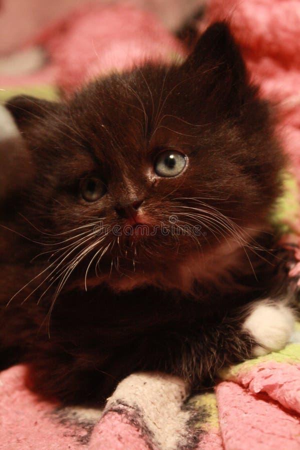сомнения котенка стоковое изображение