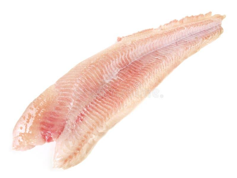 Сом - филе рыб стоковое изображение