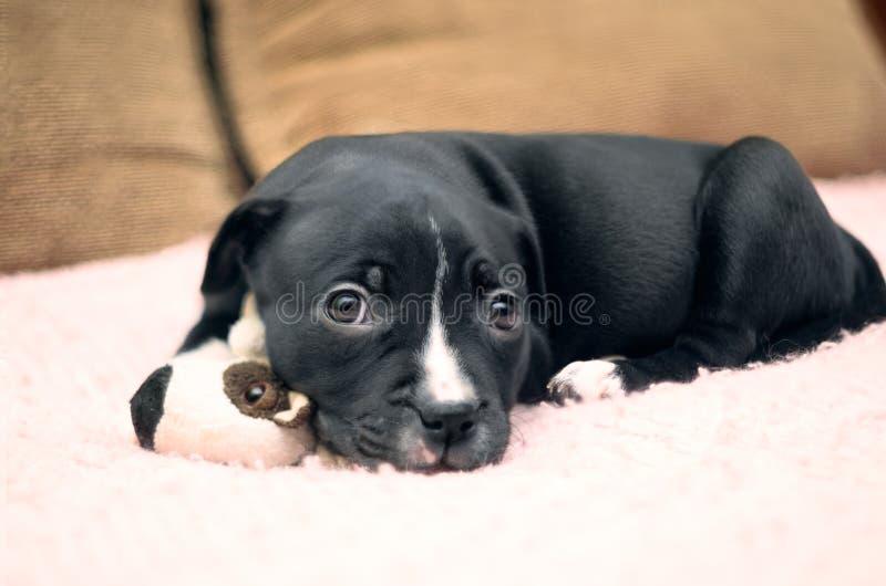 Сонная молодая собака щенка лежа на розовом одеяле с его игрушкой и идет стоковые изображения