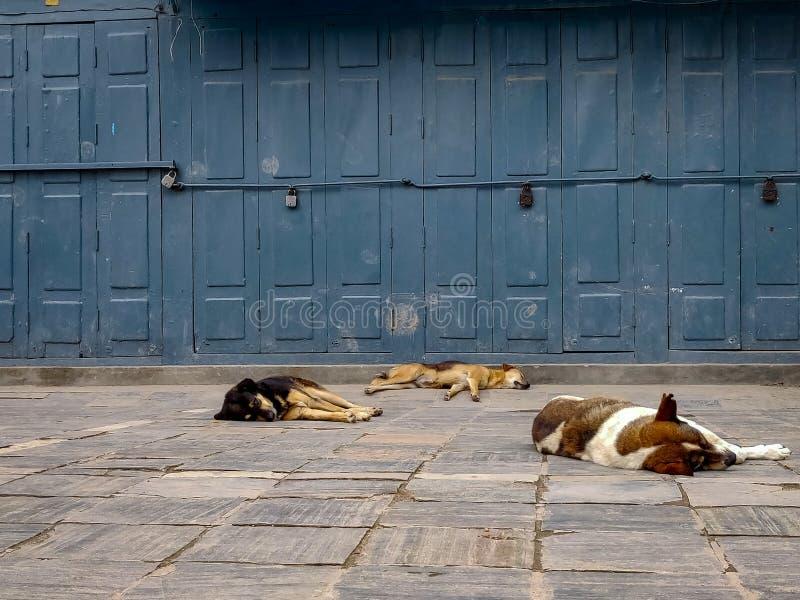 Сонные бездомные собаки стоковое фото