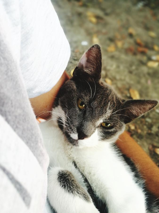 Сонный кот с мечтательными глазами стоковая фотография rf