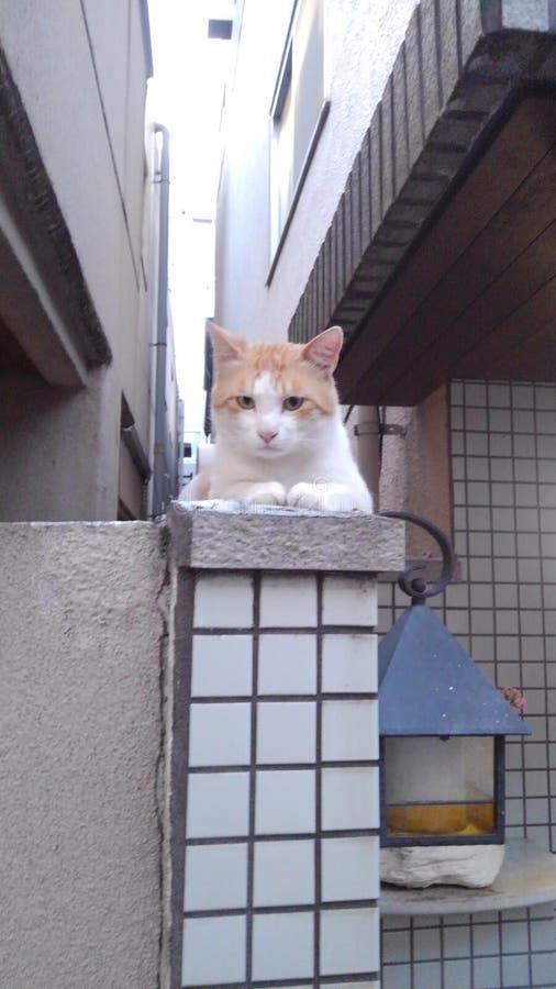 Сонный кот стоковые фото