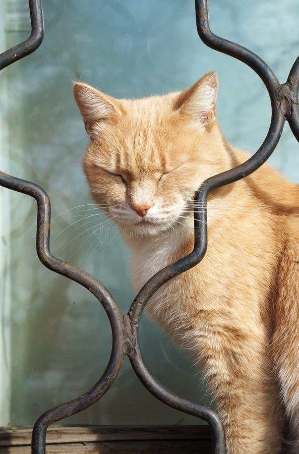 Сонный кот! стоковое изображение rf