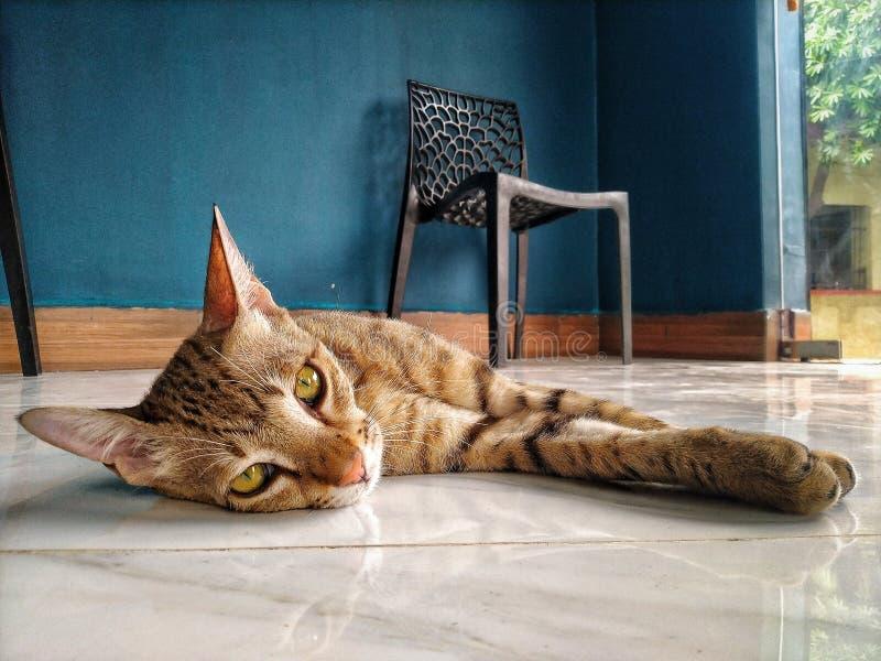 Сонный кот стоковая фотография rf