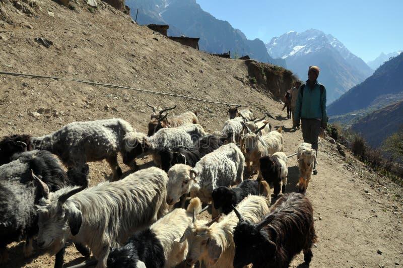 Сон в Гималаях стоковое изображение