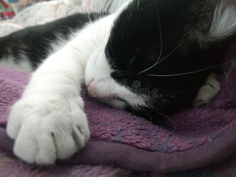 Сон кота стоковые фото