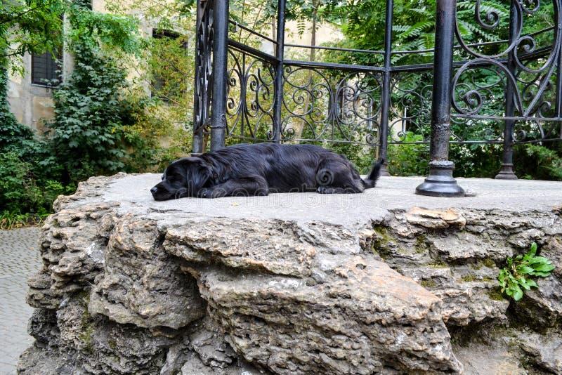 Сон собаки стоковое фото