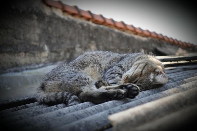 сон стоковые фото