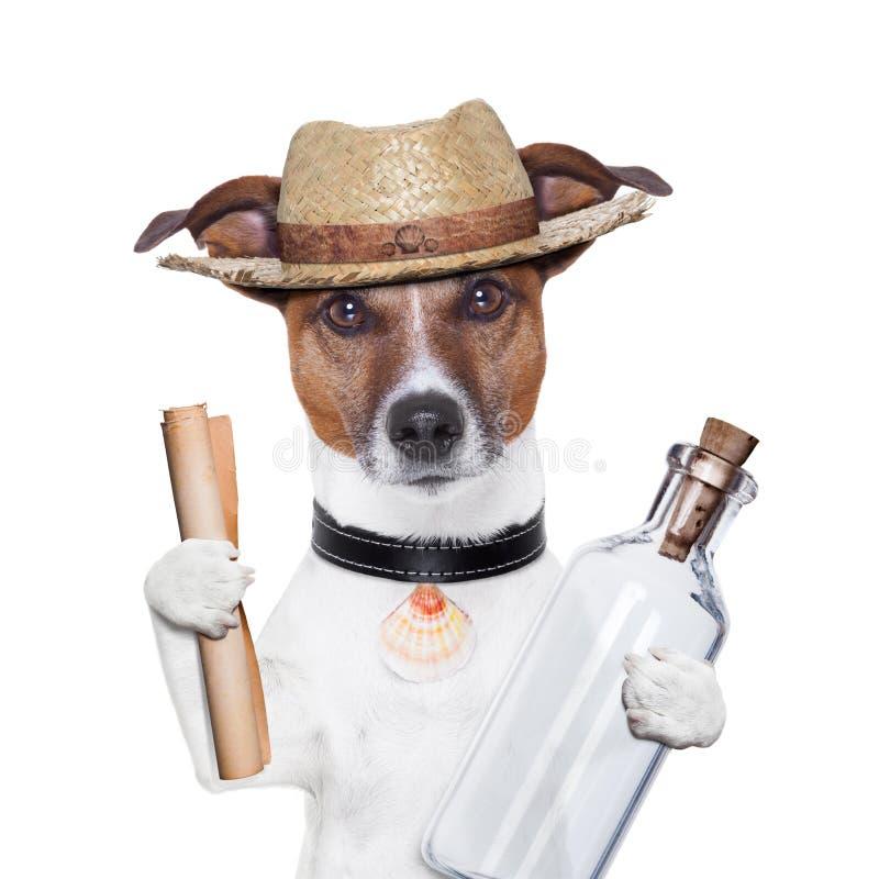Сообщение в собаке бутылки стоковые фотографии rf