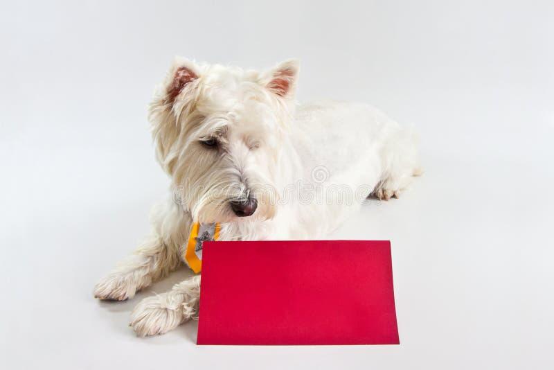 Download Сообщение красного цвета Westie Стоковое Изображение - изображение насчитывающей плакат, столб: 37930669