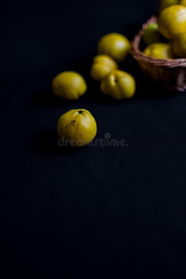 Сорванные желтые плодоовощи Chaenomeles айвы на темной предпосылке стоковые изображения
