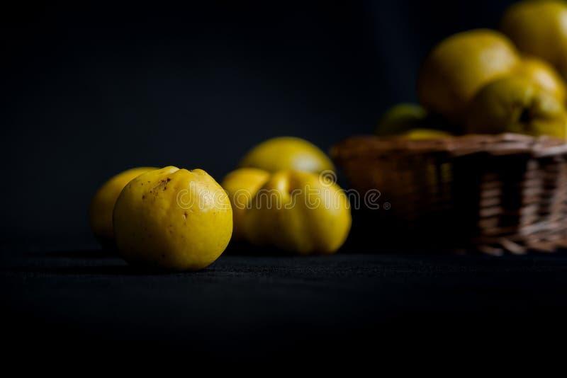 Сорванные желтые плодоовощи Chaenomeles айвы на темной предпосылке стоковая фотография