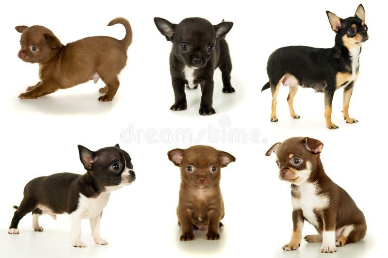 Download Сортированные малые щенята стоковое фото. изображение насчитывающей отечественно - 37928752