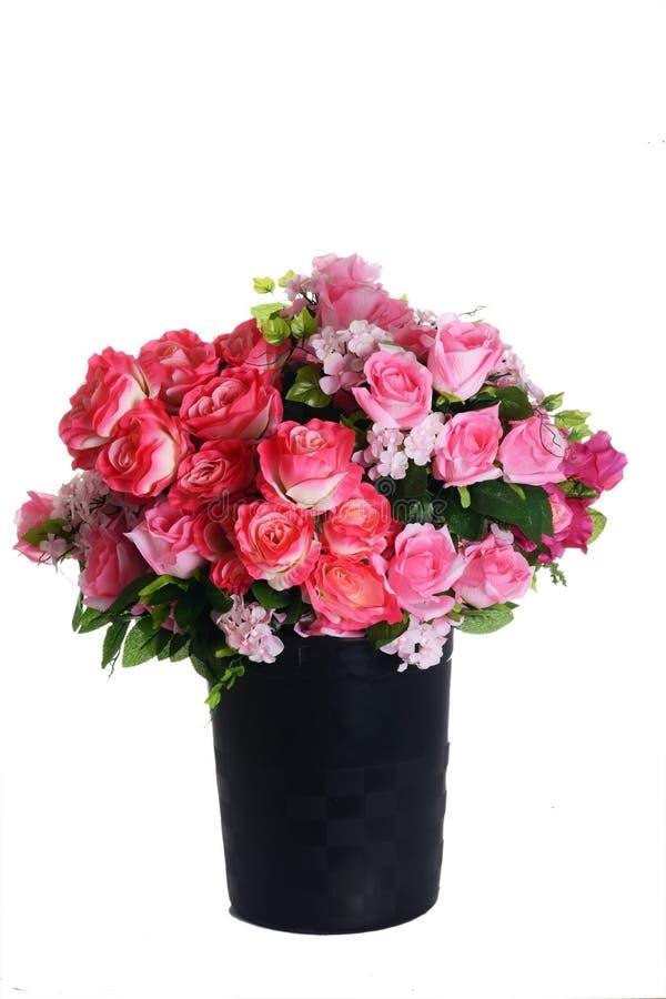 Сортированные розы на белизне стоковые изображения rf