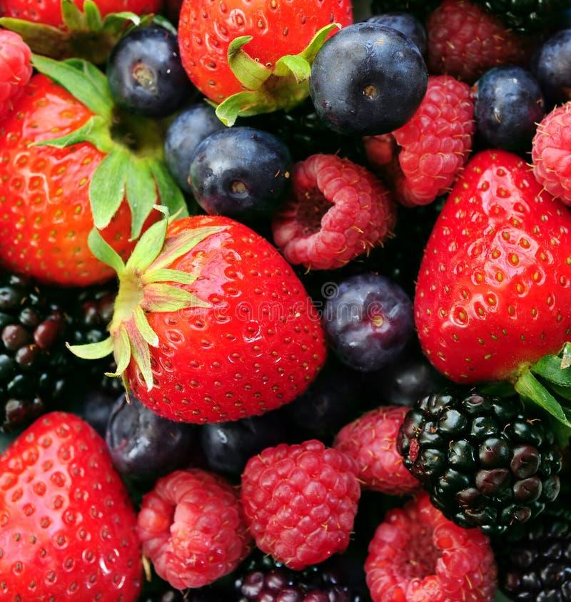 сортированные ягоды свежие стоковые изображения rf