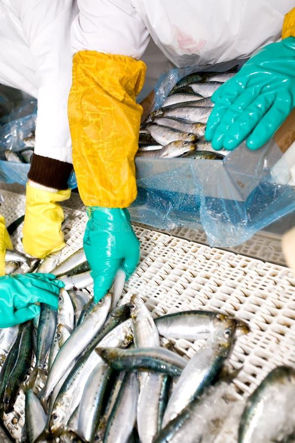 сортировать рыб стоковые изображения rf