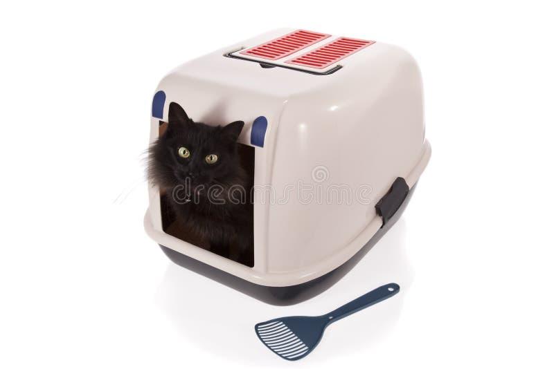 сор коробки закрынный котом используя стоковое изображение