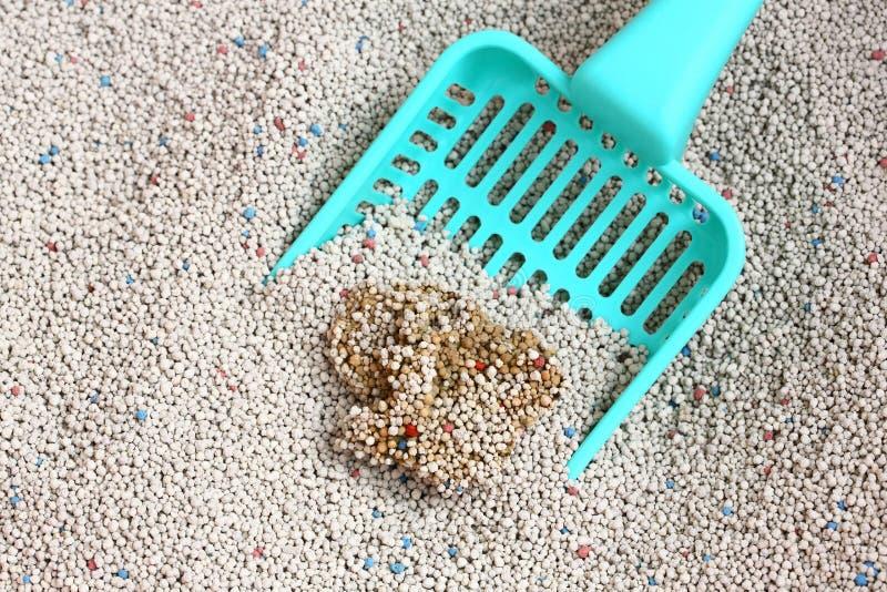 Сор кота с ветроуловителем песка кота стоковые изображения rf