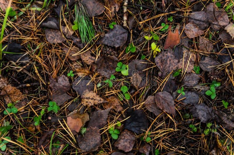 Сор лист в поле соснового леса стоковые изображения rf