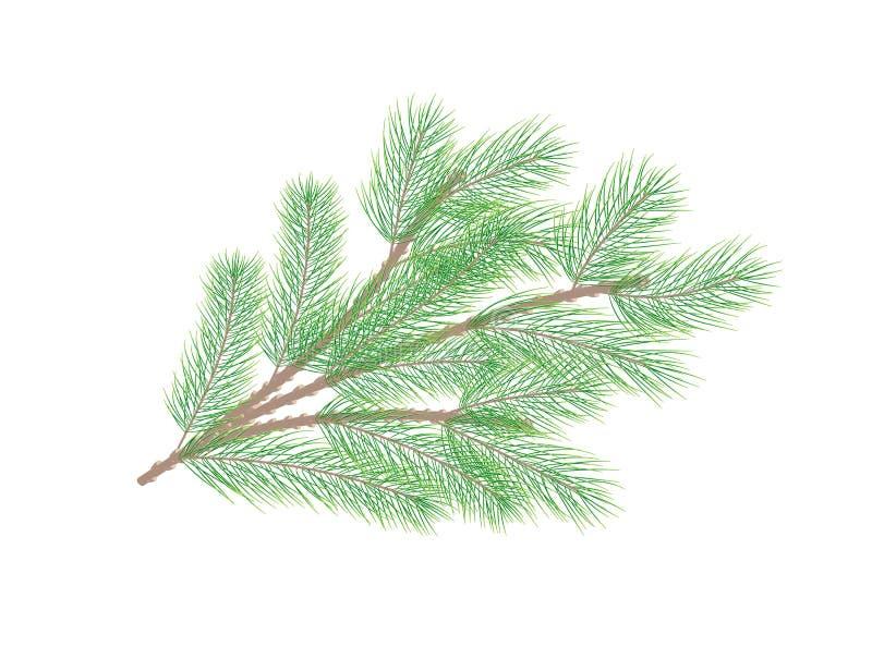 сосенка ветви зеленая вал ели ветви близкий вверх вектор иллюстрация штока