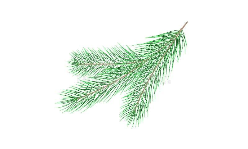 сосенка ветви зеленая вал ели ветви близкий вверх вектор бесплатная иллюстрация