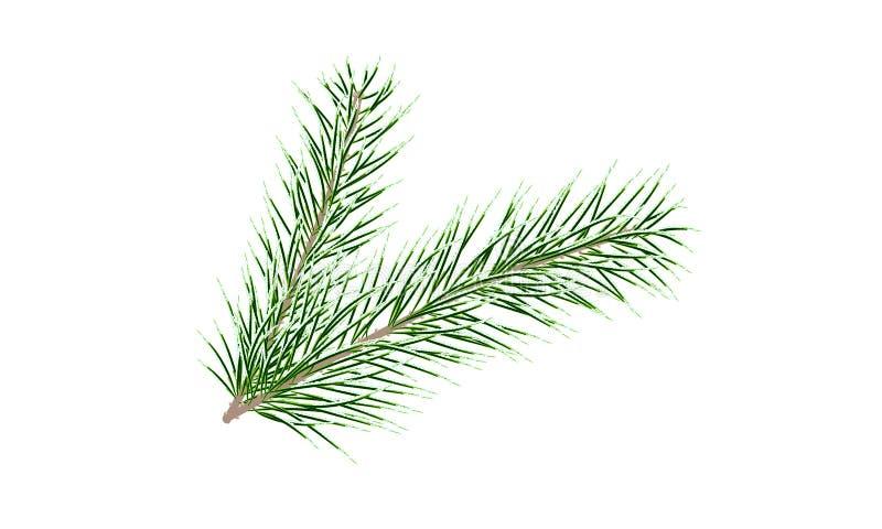 сосенка ветви зеленая вал ели ветви близкий вверх вектор иллюстрация вектора
