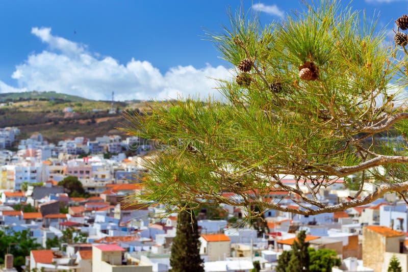 сосенка ветви зеленая Rethymno, Крит стоковые изображения rf