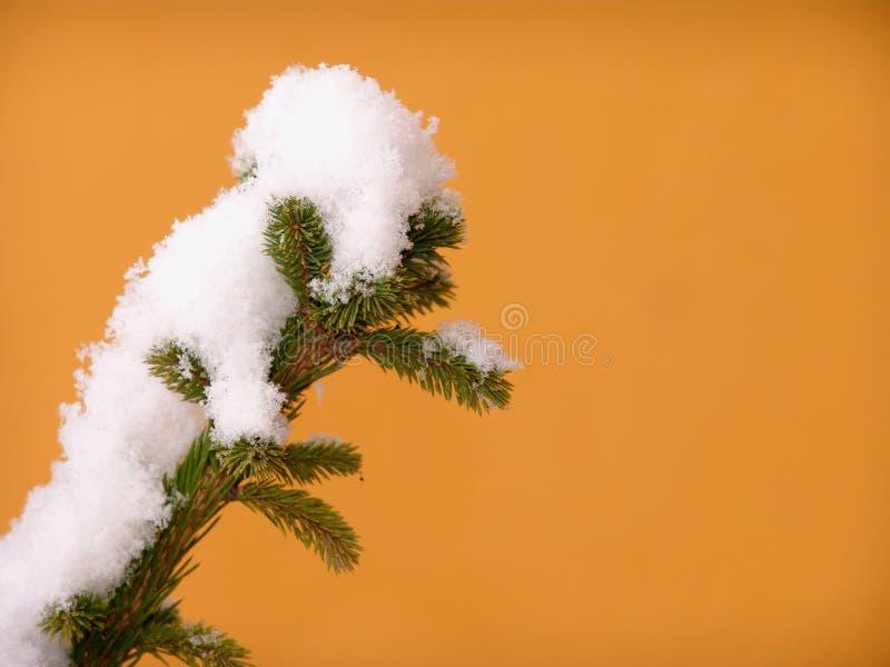 сосенка ветви снежная Стоковое фото RF