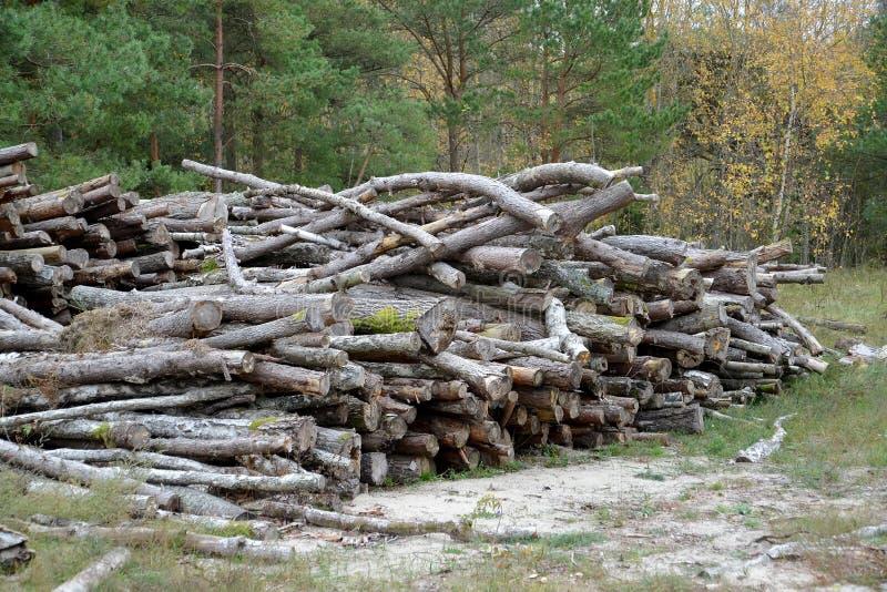 Сосна вносит стог в журнал в древесине осени logging стоковые фото