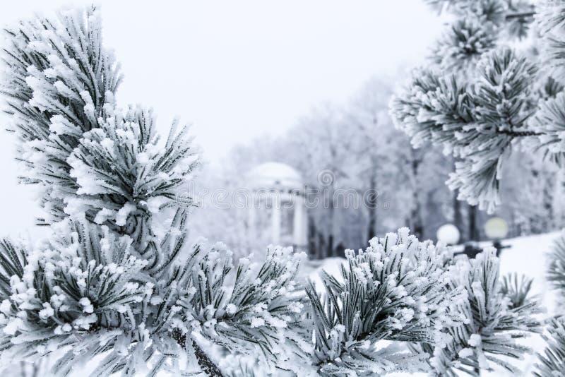 Сосна разветвляет при иглы покрытые заморозком и газебо стоковые фото