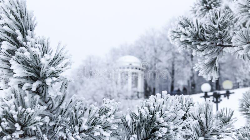 Сосна разветвляет при иглы покрытые заморозком и газебо стоковые изображения