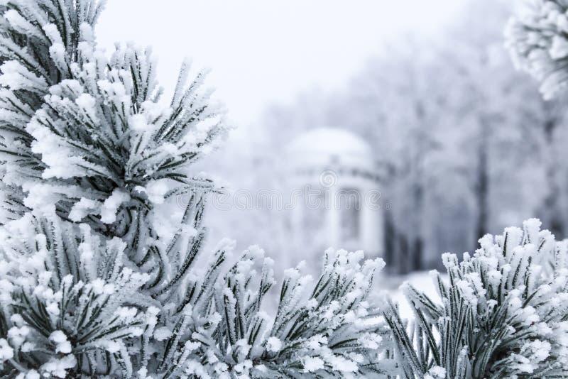 Сосна разветвляет при иглы покрытые заморозком и газебо стоковое изображение rf