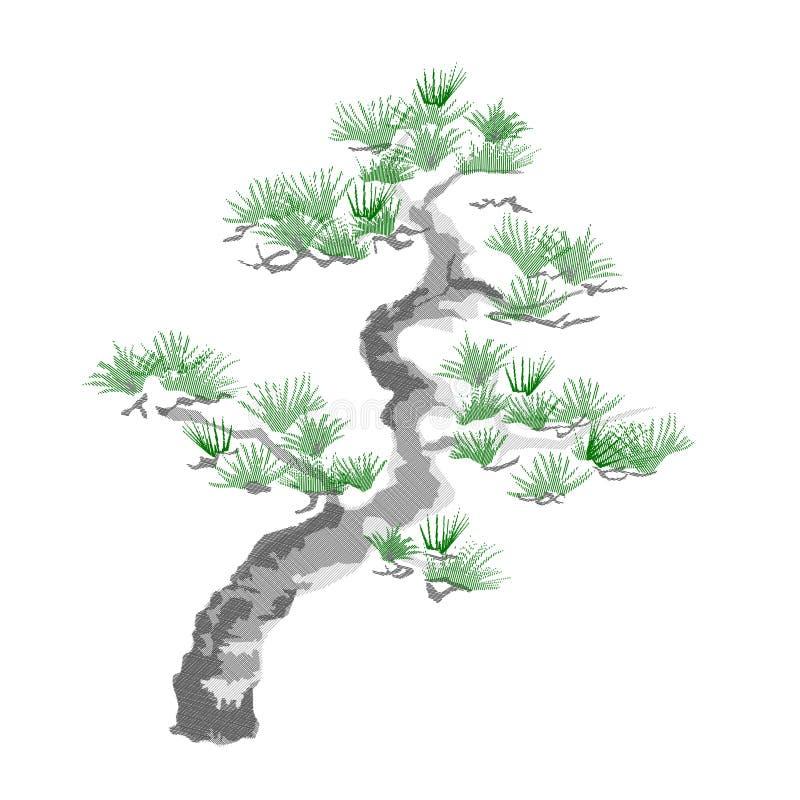 Сосна Loric, leucodermis Pinus стоковые изображения